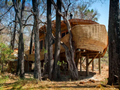 这个间环保型奢侈酒店 外形像穿山甲一样的林中小屋