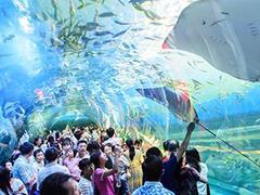 益阳海洋城10月1日开业 为湖南首个海洋文旅商业综合体