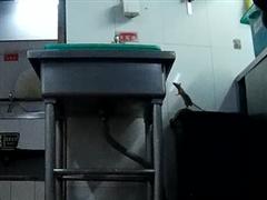 暗访海底捞:老鼠爬进食品柜 火锅漏勺掏下水道!