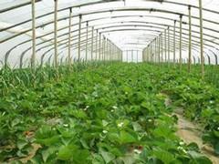 甘肃建成7个国家级出口食品农产品质量安全示范区