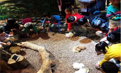 开业当日客流量破5000人次 一起来探秘泉州这家新开的室内动物园
