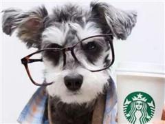 星巴克布局宠物友好社区店 社区咖啡馆的潜力被低估?