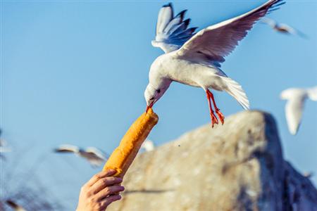 红嘴鸥的南迁之旅,是对温暖的想象!