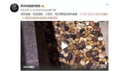 小龙坎长沙一家分店疑似惊现活老鼠 负责人:立即着手进行调查
