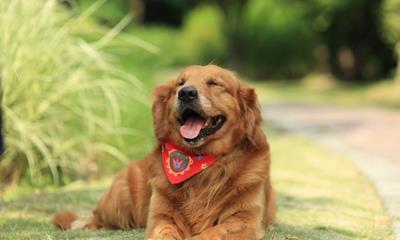 盒马再次变更经营范围 新增宠物服务、家电维修、保洁家政服务