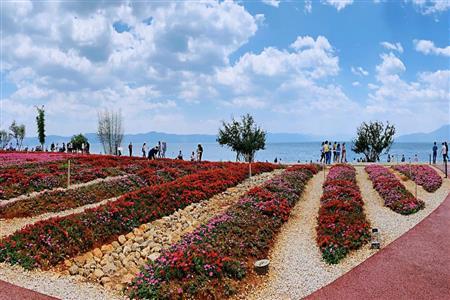 抚仙湖网红花海 给了众多文旅小镇一记响亮的耳光