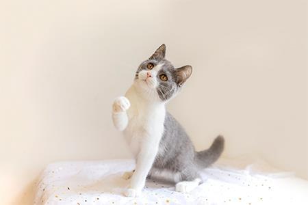 小猫来了完成数百万元天使轮融资 现已开设直营门店7家