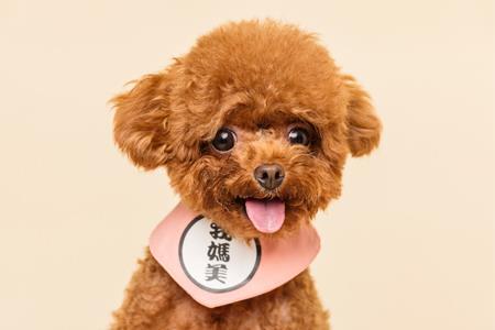肯德基郑州公司发生工商变更 经营范围新增宠物食品零售